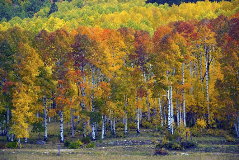 Colorado Fall Activities and Events .